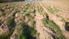 Zaorane pole wiosną pod siewy