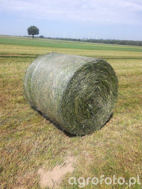 Balot z trawy