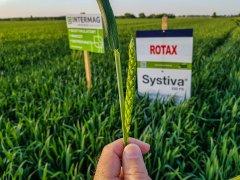 Pszenica ozima Rotax - Systiva 19.05.2018