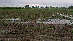 1,5 miesiąca bez kropli deszczu a dziś w ciągu 8 godzin spadło 35l/m2, jeszcze ma padać jutro i w piątek, pogoda będzie chciała sie zrekompensować