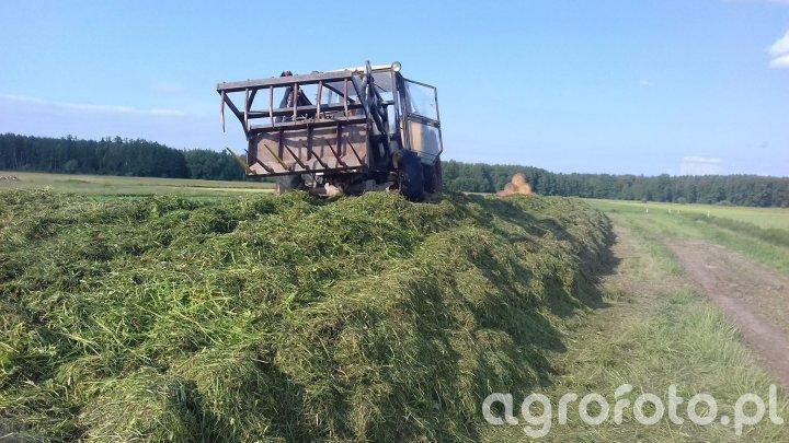 Zbiór traw 2k18
