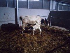 Porodówka i jej pierwsze mieszkanki