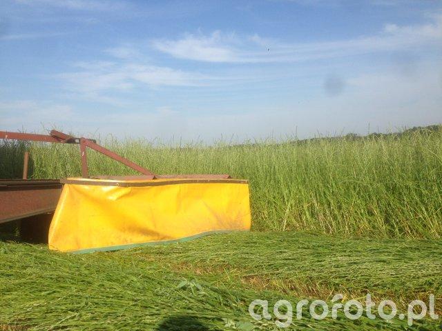Zbiór trawy jednorocznej contury 2053 turbo