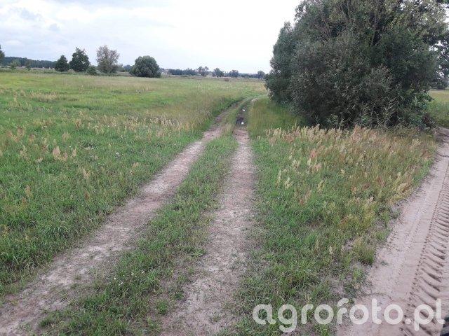 Droga przez łąkę