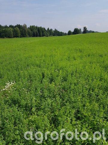Łąki i pastwiska