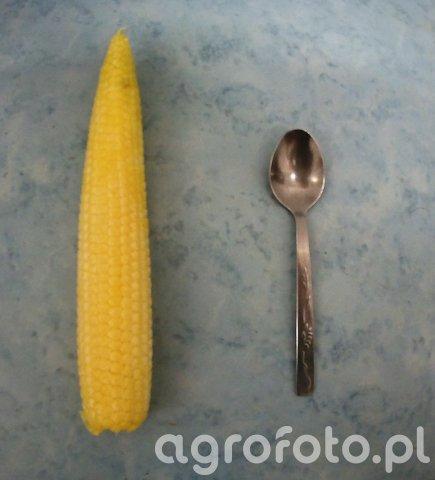 Kukurydza Walterinio