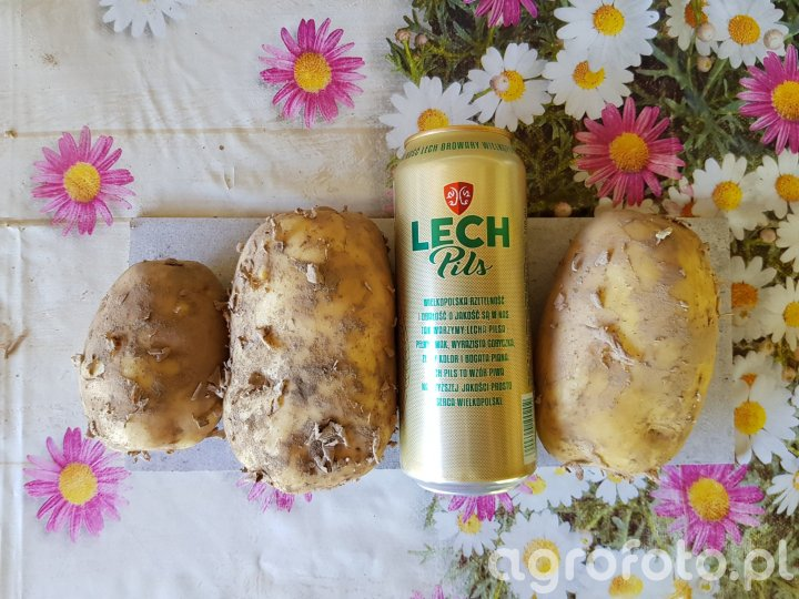 ziemniaki lord 7.7.2018