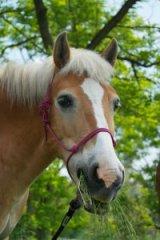 Słodki koń