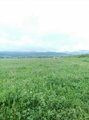 Bydło i pastwisko