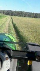 Mieszanka traw