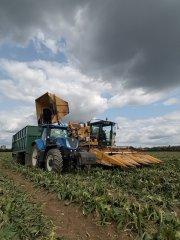 Oxbo kombajn do zbiorów słodkiej kukurydzy i New Holland T7 245