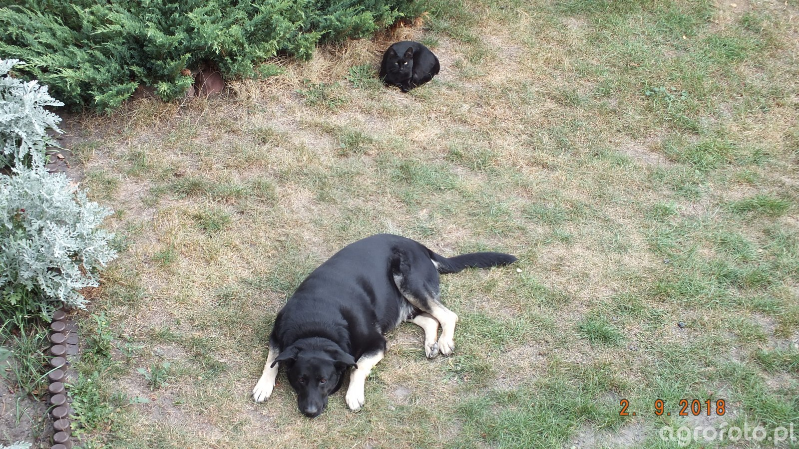 Pies I Kot Zdjęcie Fotka Foto Numer 737287 Galeria Rolnicza