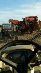 Grimme SR 80-40 z John Deere 5720, Kubota M6060 i Ursus 3512 z przyczepami
