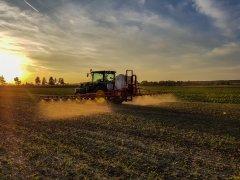 Rzepak Atora F1 - 11.09.2018 - zwalczanie samosiewów zbóż