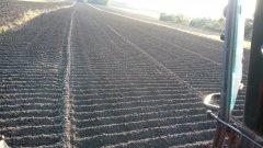Działka przygotowana pod sadzenie czosnku.