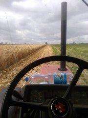 Młócenie kukurydzy