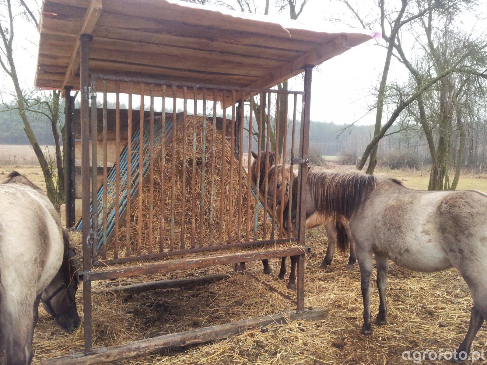 Paśnik dla koni