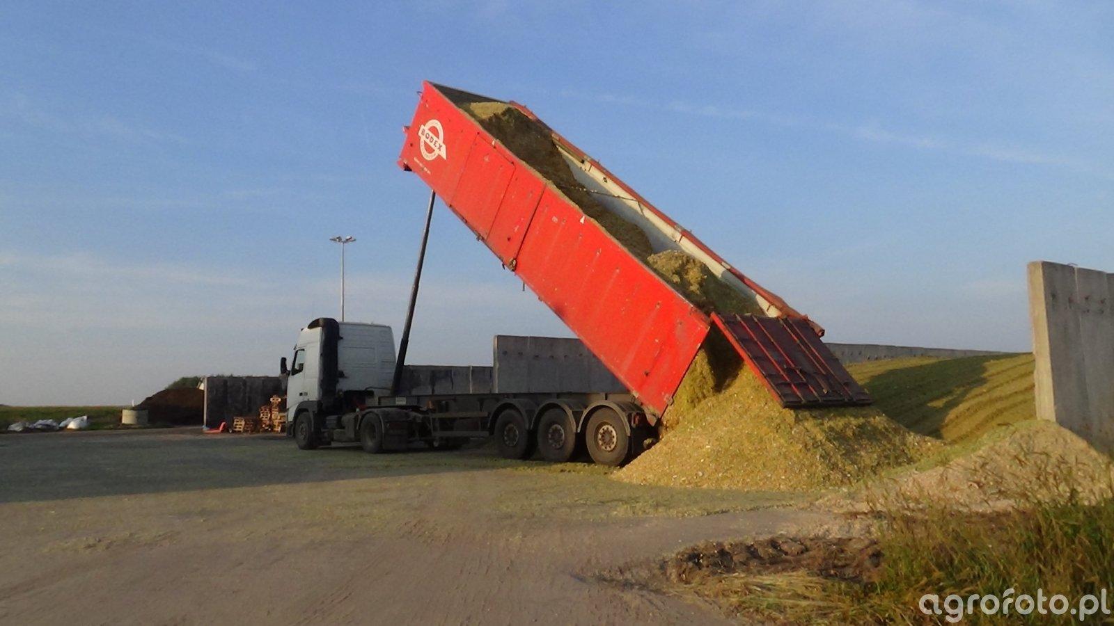 Ciecie Kukurydza na Biogaz