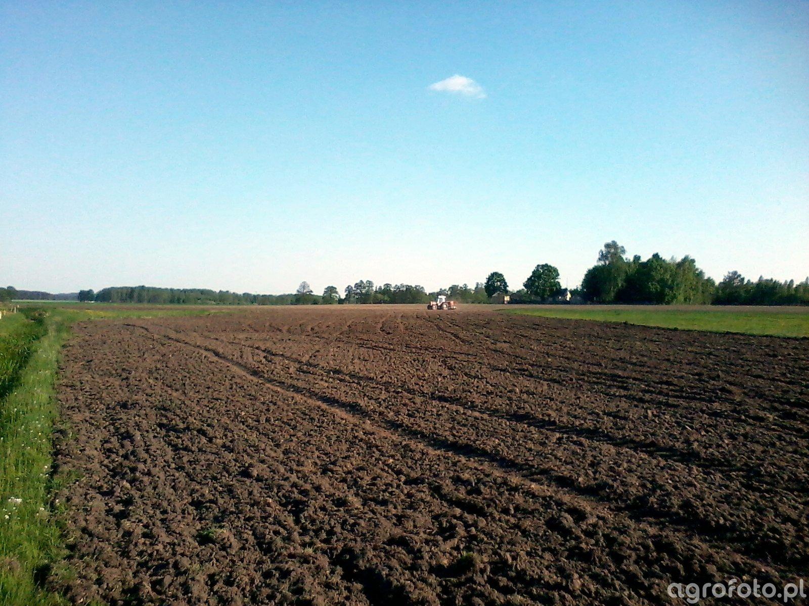 Siew łąki
