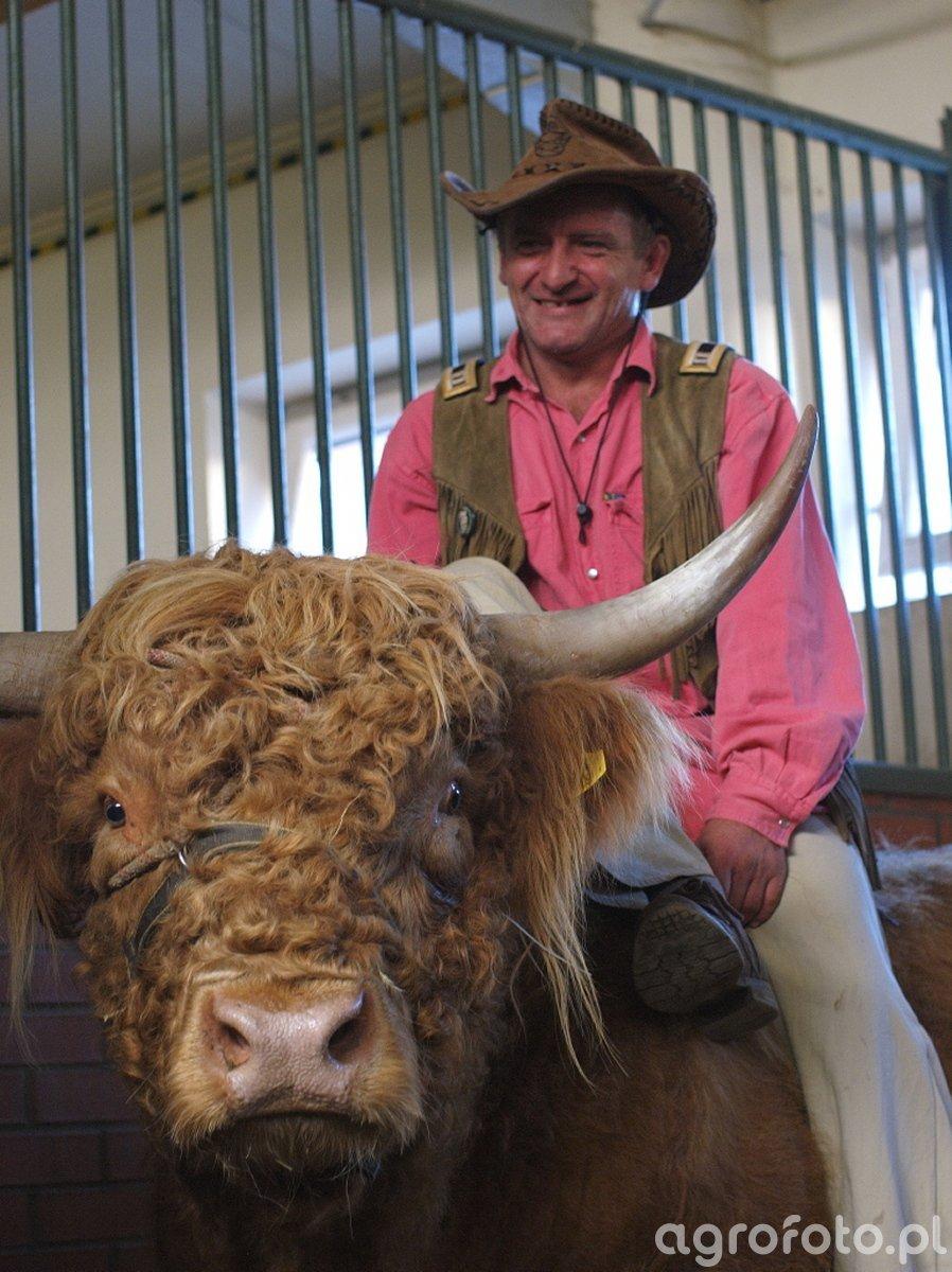 Highland Cattle...