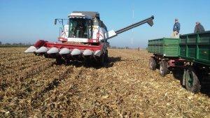 Vectro 420 w kukurydzy