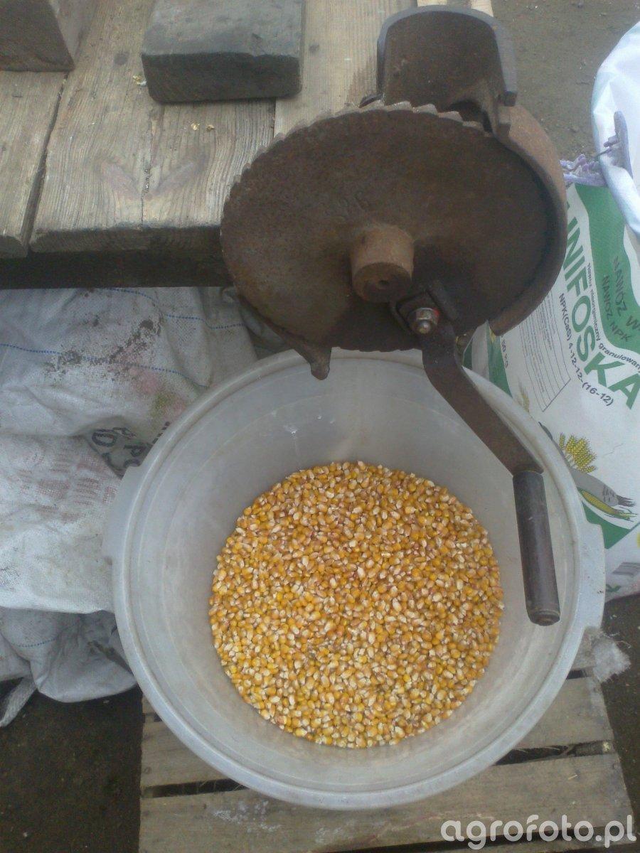 Sprzęt do kukurydzy