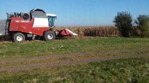 Vector 420 w kukurydzy