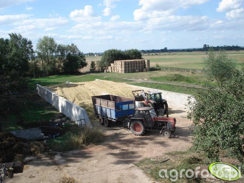 Akcja kukurydza