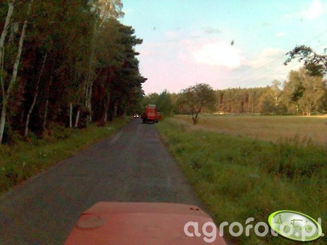 Bizon na drodze