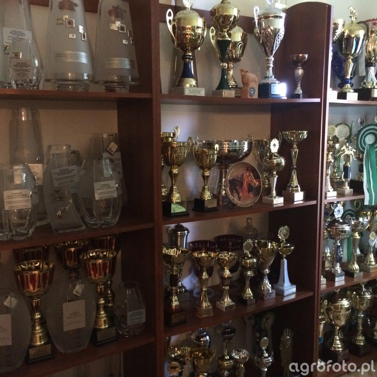 Puchary w Dobrzyniewie