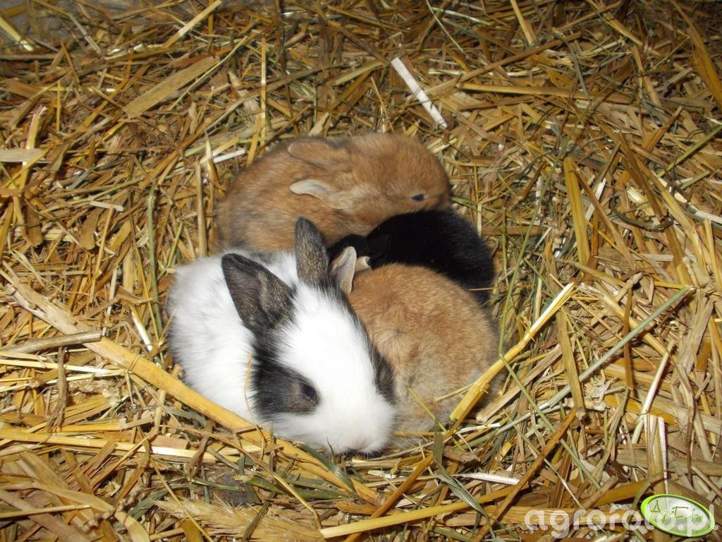 Gniazdo królików