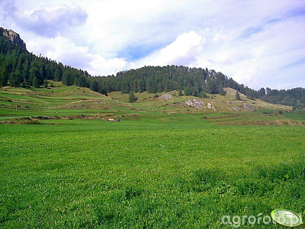 Górskie łąki