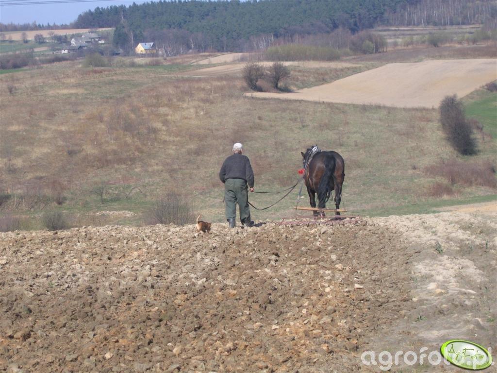 Koń w pracy