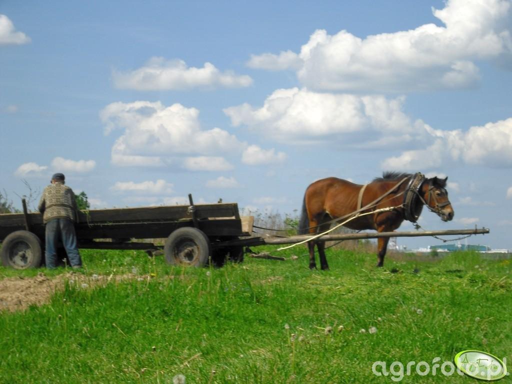 Koń z wozem