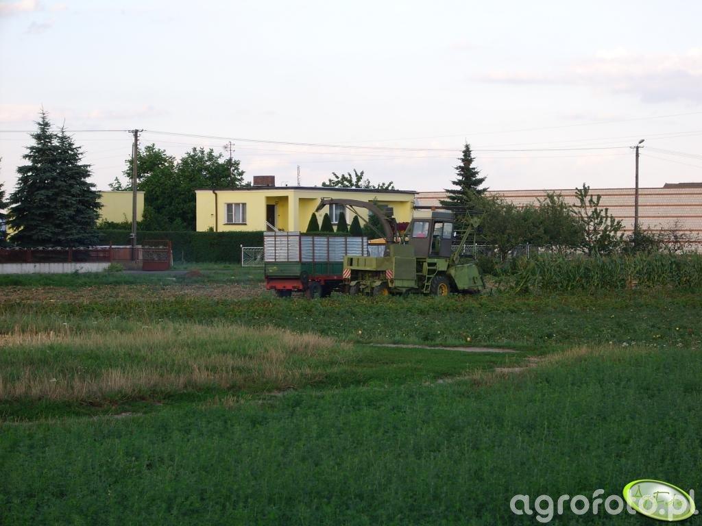 Koszenie kukurydzy 13.08.2008