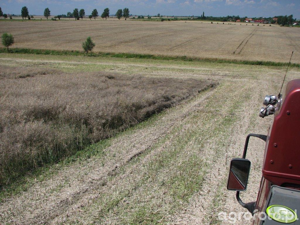 Koszenie rzepaku 15.07 łan i okoliczne pola