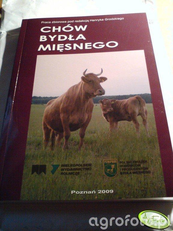 Książka Chów bydła mięsnego