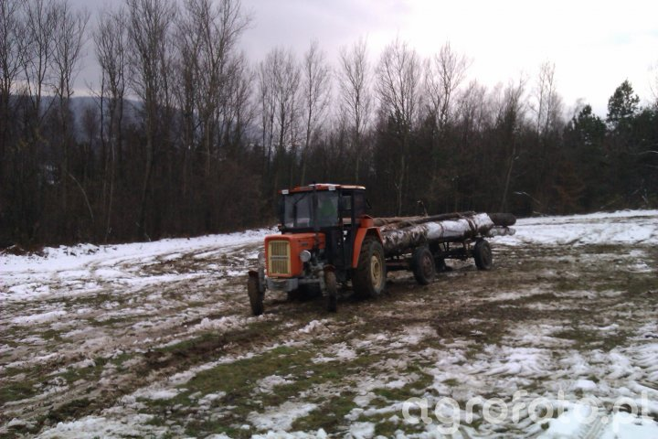 c360 3P I praca Z drzewem