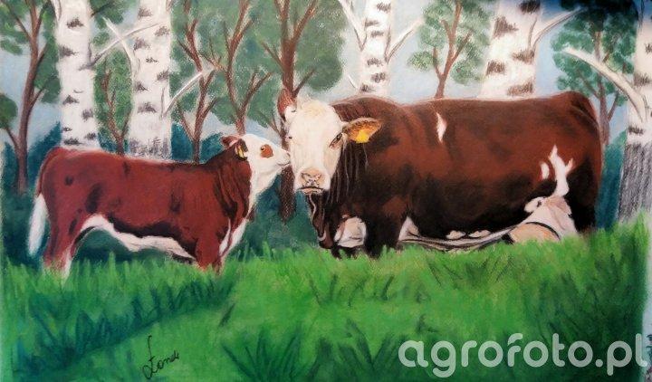 Obraz krowa Simental z cielakiem