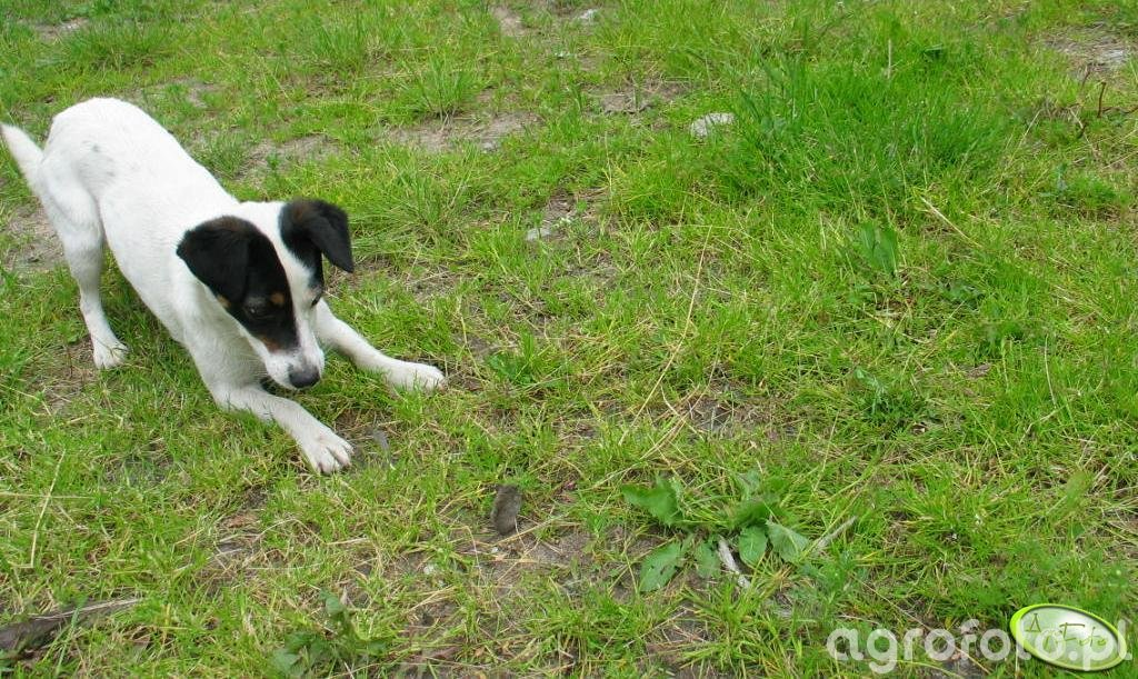 Mój pies Maja