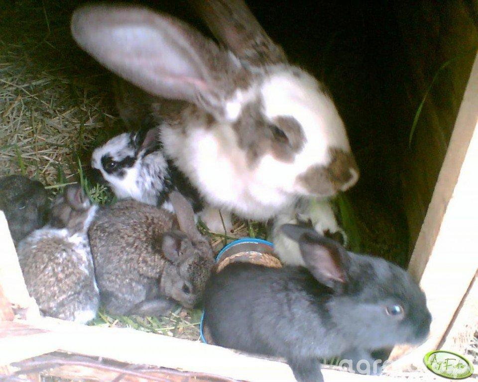 Moje króliczki