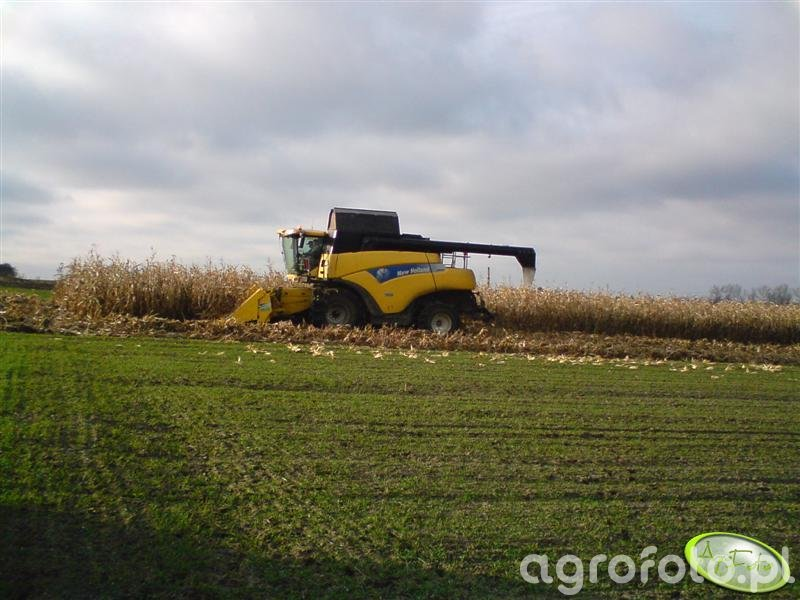 NH CR980 w kukurydzy
