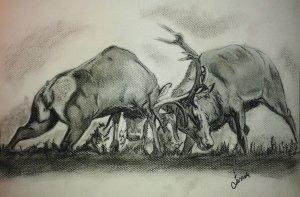 Obrazy zwierząt mojego wykonania