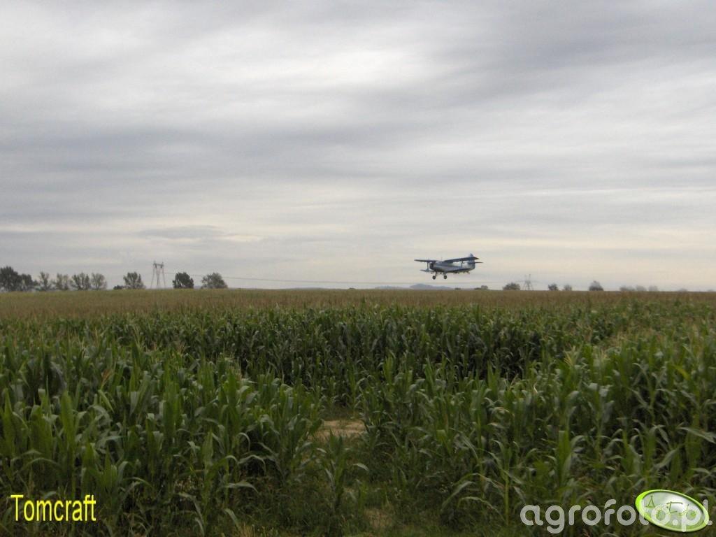 Oprysk kukurydzy 24.07.2008