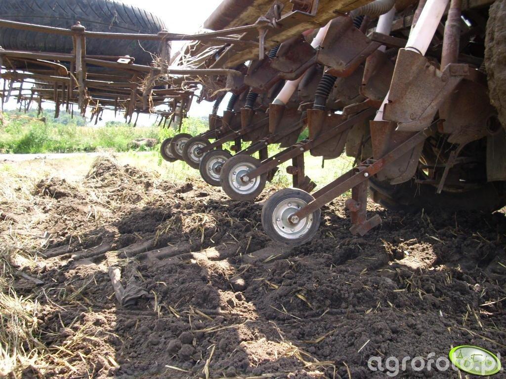 Poznaniak  do kukurydzy :)