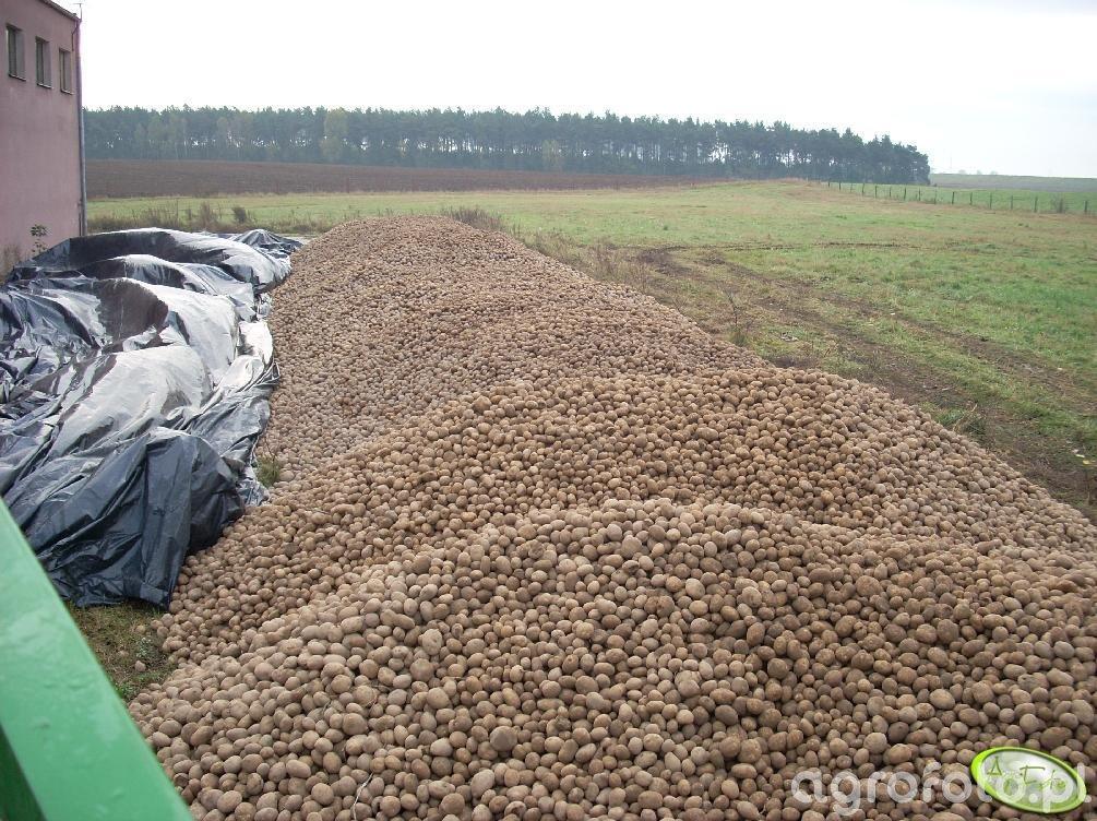 Pryzma ziemniaków