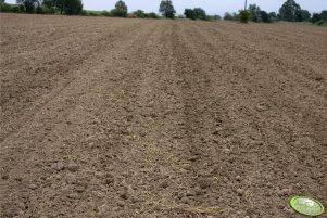 Jesien 2009 w polu