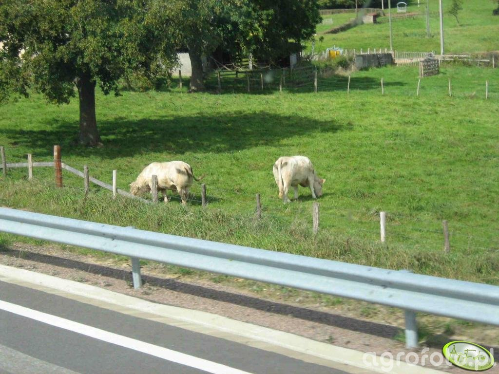 Wypas przy autostradzie...