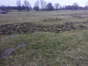 Łąka obok rzepaku