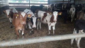 Nowa wiata dla bydła